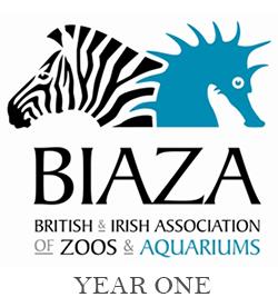Biaza Year 1